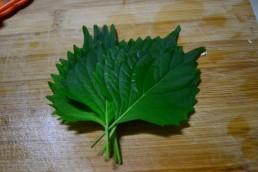 shizo leaves